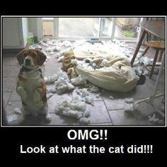 Il divano è esploso da solo...