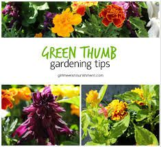 gardening tips - Google Search