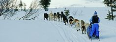 The Iditarod dog sled race in Anchorage, Alaska. Starting from Anchorage each March and ending eight to 15 days later in Nome, the Iditarod is one of the great endurance tests in sport, with competitors from around the globe mushing sled dogs across 1,150 miles of snow in temperatures as low as 40 below zero. No wonder it's been called 'The Last Great Race on Earth'.