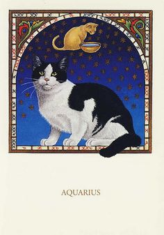 FRANCIEN VAN WESTERING - AQUARIUS CAT