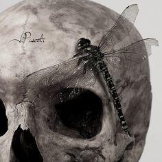 anax sur crane   Flickr - Photo Sharing! Julien, Gothic Art, Macabre, Crane, Skulls, Creepy, My Books, Photos, Animals