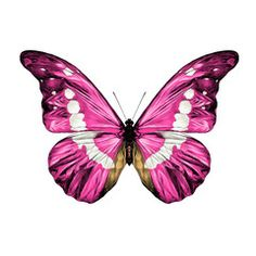 Butterfly Tattoo Designs, Pink Butterfly, Art Papillon, Butterfly Species, Moth Tattoo, Free Prints, Beautiful Butterflies, Colorful Pictures, Creative Art