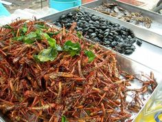 Thailand exotic foods: fried grasshoppers and other insects!