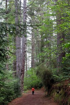 Conical hill forest walk- Hanmer Springs New Zealand DONE august 2014 MQ