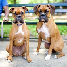 Cleo & Cassius, Boxers, Central Park, New York, NY