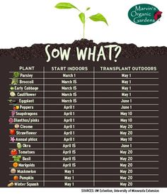 Chart of when to start growing veggie & fruit plants indoors and transplant them. - Chart of when to start growing veggie & fruit plants indoors and transplant them outdoors - Veg Garden, Fruit Garden, Edible Garden, Garden Plants, Indoor Plants, Vegetable Gardening, Potager Garden, Veggie Gardens, Planting Vegetables