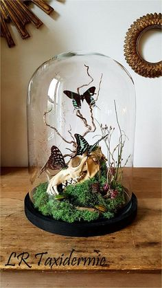 Plante Sous Cloche, Taxidermy Decor, Deco Boheme, Arts And Crafts, Diy Crafts, Garden Terrarium, The Bell Jar, Gothic Home Decor, Gothic House
