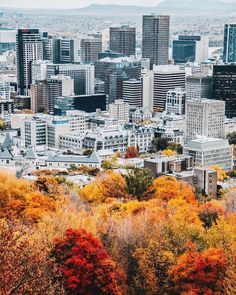Montreal Quebec, Montreal Canada, Holiday Destinations, Travel Destinations, Mont Real, Istanbul, Travel Inspiration, Mindfulness, Earth