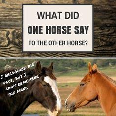 Horse jokes - photo#10