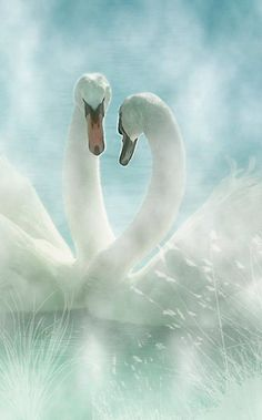 Love in the mist • photo: Lyn Evans on Redbubble