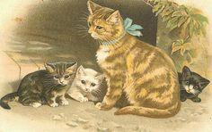 Cat & her kittens.