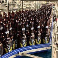 Abita Andygator® on the bottle line. #AbitaBrewery