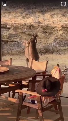 Cute Animal Videos, Funny Animal Pictures, Cute Funny Animals, Cute Baby Animals, Western Film, Nature Animals, Animals And Pets, Strange Animals, Beautiful Creatures