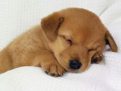 5 Adorably sleeping dogs which will make you go aww, Click on the pic to see all