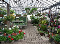 K Drive Greenhouses, MI | HC Retailers | Pinterest | Gardens, Shrub And  Plants