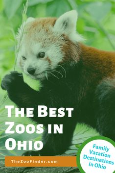 If you want to go on a zoo family summer vacation, Alabama has some excellent zoos to offer in Gulf Shores, Montgomery, Birmingham, and Dauphin Island! Check out one of these Alabama zoos for your next summer family vacation! Us Travel Destinations, Family Vacation Destinations, Places To Travel, Family Vacations, Dauphin Island Sea Lab, Zoos In Ohio, Alabama Gulf Coast Zoo, Birmingham Zoo, Alabama Vacation