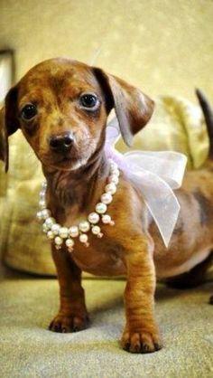 Oh so cute!