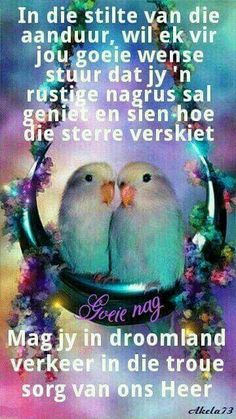 Pictures of Lovebirds and Love Bird Gifts Cute Birds, Pretty Birds, Beautiful Birds, Animals Beautiful, Simply Beautiful, Beautiful Images, Animation, Animals And Pets, Cute Animals
