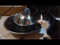 Diy Cat Dog Water Fountain Cool Idea My Cats Will