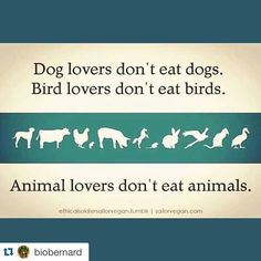 Stop Being Hypocritical And Having Double Standards!!Dog Lovers Don't Eat Animals!Animal Lovers Don't Eat Animals!!Go Vegan!!