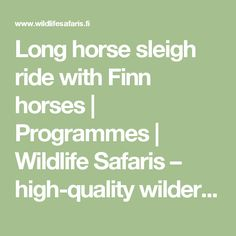 Long horse sleigh ride with Finn horses | Programmes | Wildlife Safaris – high-quality wilderness safaris, combined with a comprehensive array of services in Ranua, Finland