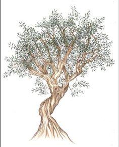 Coloriage Arbre Dolive.36 Meilleures Images Du Tableau Oliviers Olive Tree Provence Et