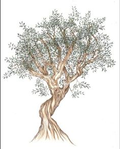 r sultat de recherche d 39 images pour dessin olivier botanical pinterest tree illustration. Black Bedroom Furniture Sets. Home Design Ideas