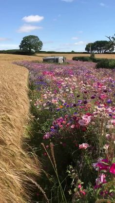 Flowers in British countryside - beautiful flowers,beautiful scenery,british countryside,england travel Beautiful Landscapes, Beautiful Gardens, Beautiful Flowers, Meadow Garden, Dream Garden, Prairie Garden, Big Garden, Garden Beds, Cottage Garden Design