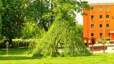 Živé stavby z vrby - vrbové stavby - Proutěné ploty a rohože na plot   Vrbové stavby - Naše realizace Living Willow, Pergola, Arch, New Homes, Outdoor Structures, Garden, Plants, House, Future