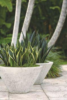 Snake Plant: Trouble-Free Gardening with Sansevierias - Garden Design Outdoor Planters, Concrete Planters, Outdoor Gardens, Concrete Backyard, Cement Patio, Concrete Wall, Container Plants, Container Gardening, Gardening Vegetables