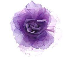 ✈紫玫瑰✈