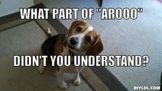 The beagle is a very intelligent and adaptable dog. They are great with kids and families.