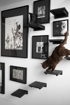 cat shelves - make sure the pictures are very secure on the wall!