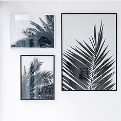 Palms reunited in @roomtodream - a beautiful shop in Munich where you can find my prints #cocolapine