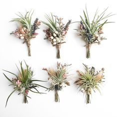 Air Plant Wildflower Boutonnieres // Tillandsia boutonnieres // wedding by Eucca on Etsy https://www.etsy.com/listing/397889069/air-plant-wildflower-boutonnieres