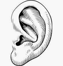 Ear Vector Images (over - VectorStock Vector Art, Illustration, Image, Sketching, Anatomy, Ears, Decoration, Decor, Illustrations