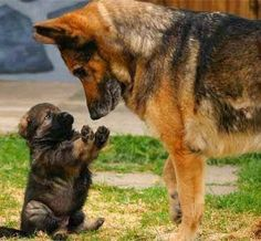 Having a Mona Lisa moment - either that puppy is thinking...look buddy I don't want any problems or he wants to play Patty Cake. - cute dogs, playful pets and small animals