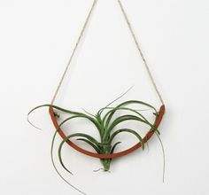 Hanging Planter – Air Plant Cradle ™ – Natural TerraCotta Wall Planter Vase - All For Herbs And Plants Indoor Planters, Diy Planters, Hanging Planters, Modern Planters, Hanging Air Plants, Air Plants Care, Plant Crafts, Air Plant Display, Decoration Plante