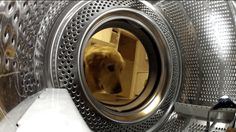 """""""Oh, I hope I'm not too late! This machine makes things soggy and terrible."""" 
