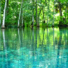 Silver Springs, FL ... swam here as kid with my family, the water is COLD!!