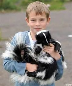 the perception of the skunk is improving as more people adopt these native-born animals as pets.