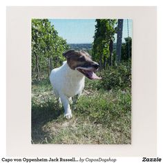 Shop Capo von Oppenheim Jack Russell Terrier, Dog Jigsaw Puzzle created by CaposDogshop. Custom Gift Boxes, Customized Gifts, Summer Dog, Make Your Own Puzzle, Animal Skulls, Jack Russell Terrier, Happy Dogs, High Quality Images, Jigsaw Puzzles