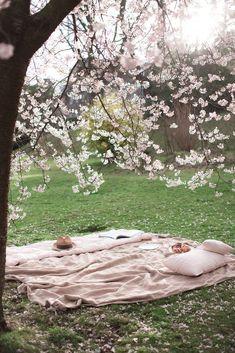 Picnic Under A Cherry Blossom Tree Cherry Blossom Tree Blossom Trees Picnic
