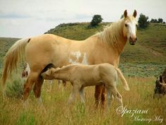 """""""Mare and foal"""""""