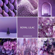 цвет осень зима 2017 pantone сиреневый royal lilac