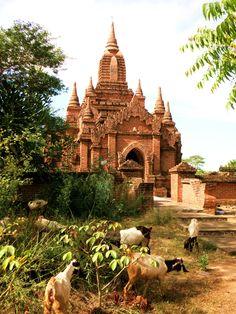Smal Pagoda in Bagan with goats