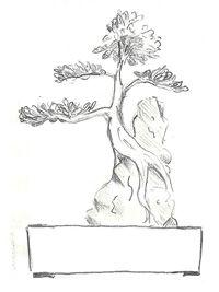 En esta oportunidad hablaremos sobre tres estilos de bonsái que se destacan debido a su gran belleza y complejidad de las técnicas que se requieren