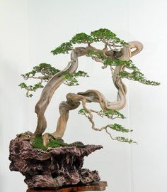 It's the bonsai, not the display, that's mind bending in this case. Though I guess the unusual tree and the way it's perched on an equally unusual rock, does make for an dramatic display.