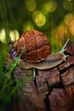 a snail is a little creature but he is so perserverent