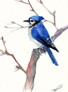 Blue Jay Original watercolor painting 12 X 9 in by ORIGINALONLY, $32.00